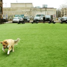 Midtown Detroit Dog Park