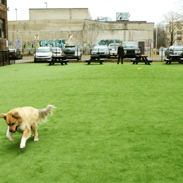 Midtown Detroit Dog Park