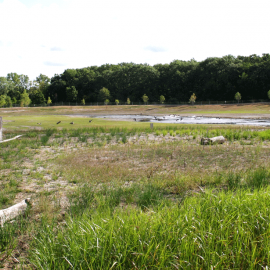 The Malletts Creek Wetland Preserve